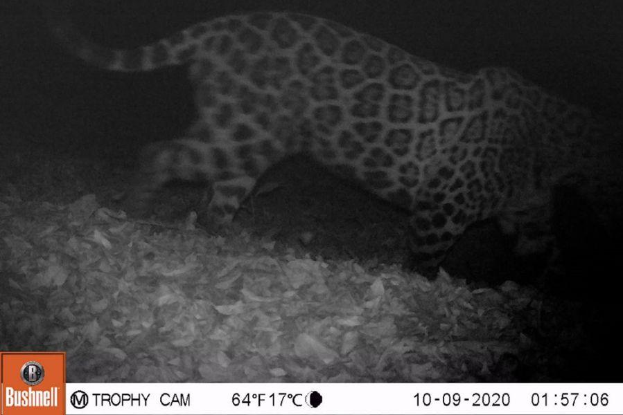 73176-importante-registro-de-fauna-en-el-parque-provincial-laguna-pintascayo