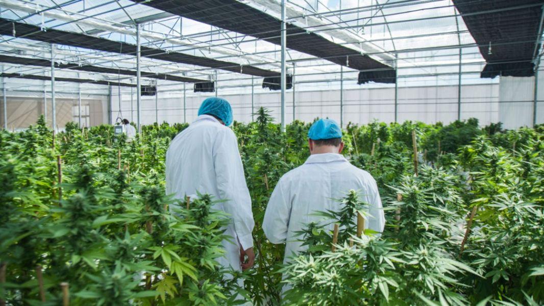El Gobierno provincial firmó un convenio con el INTA, el Fondo Especial del Tabaco y la Cámara del Tabaco de Salta. Se evaluará la adaptabilidad de variedades híbridas a las condiciones ambientales del Valle de Lerma.